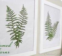 用蕨类植物diy装饰画 墙面上的枝叶元素