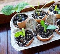 利用废弃蛋壳DIY盆栽