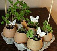鸡蛋壳diy绿色的小花园 蛋壳小盆栽的制作方法