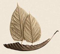 秋日自然拼贴作品 树叶拼贴艺术