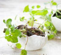 用粘土手工制作鸡蛋壳形状的器皿