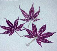 教你简单的植物拓印方法 diy春天的植物图谱