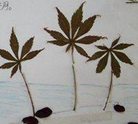 树叶贴画教案 幼儿树叶贴画制作教程