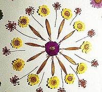 植物标本手工拼贴装饰画 把大自然留在身边