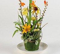 纸杯与植物diy一款精美的花卉小景观