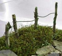 苔藓微观盆景之迷你篱笆制作步骤