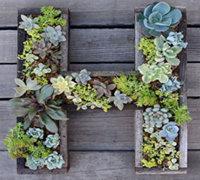 DIY安装在墙上的多肉植物字母盆栽