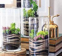 DIY多肉植物微景观生态沙画艺术花瓶