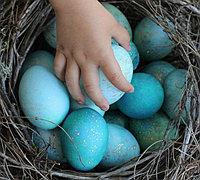 普通鸡蛋DIY成湖蓝色知更鸟蛋