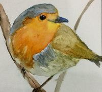 小鸟的画法 圣诞小鸟水彩画手绘教程