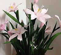 皱纹纸花教程之粉色韭兰制作图解