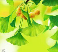 彩铅手绘小清新银杏叶的教程