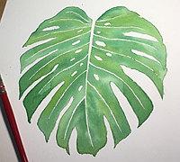手绘叶子教程 清新树叶手绘