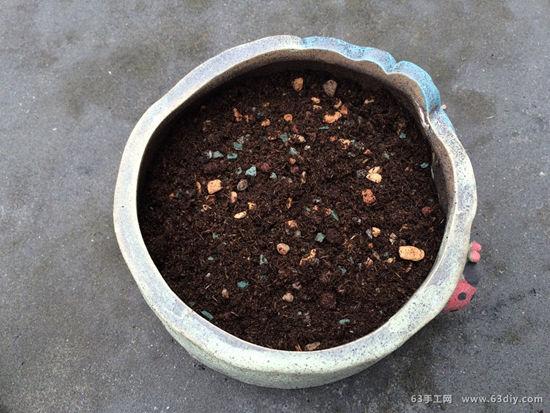 多肉盆栽造型图片图片