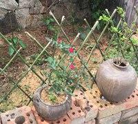 竹条制作田园风篱笆爬藤架
